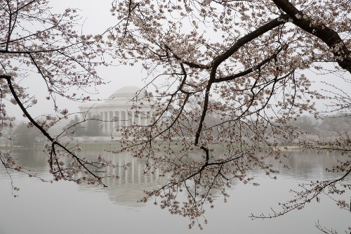It's Cherry Blossom Season! in Pictures