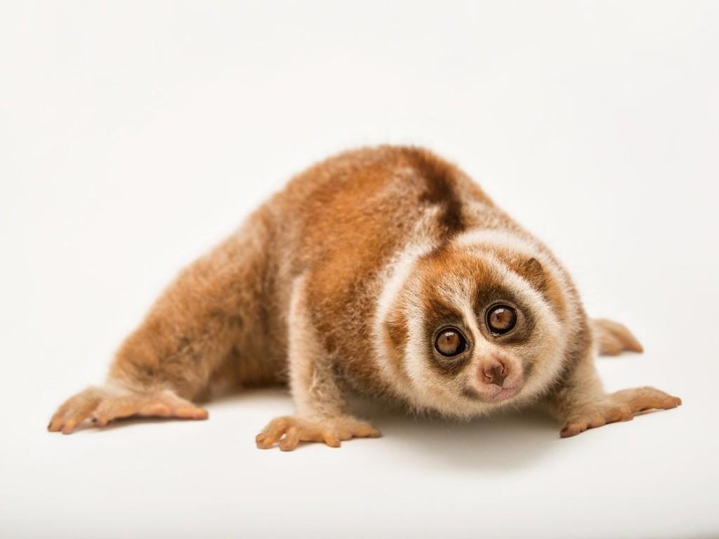 Lovable Huggable & Endangered