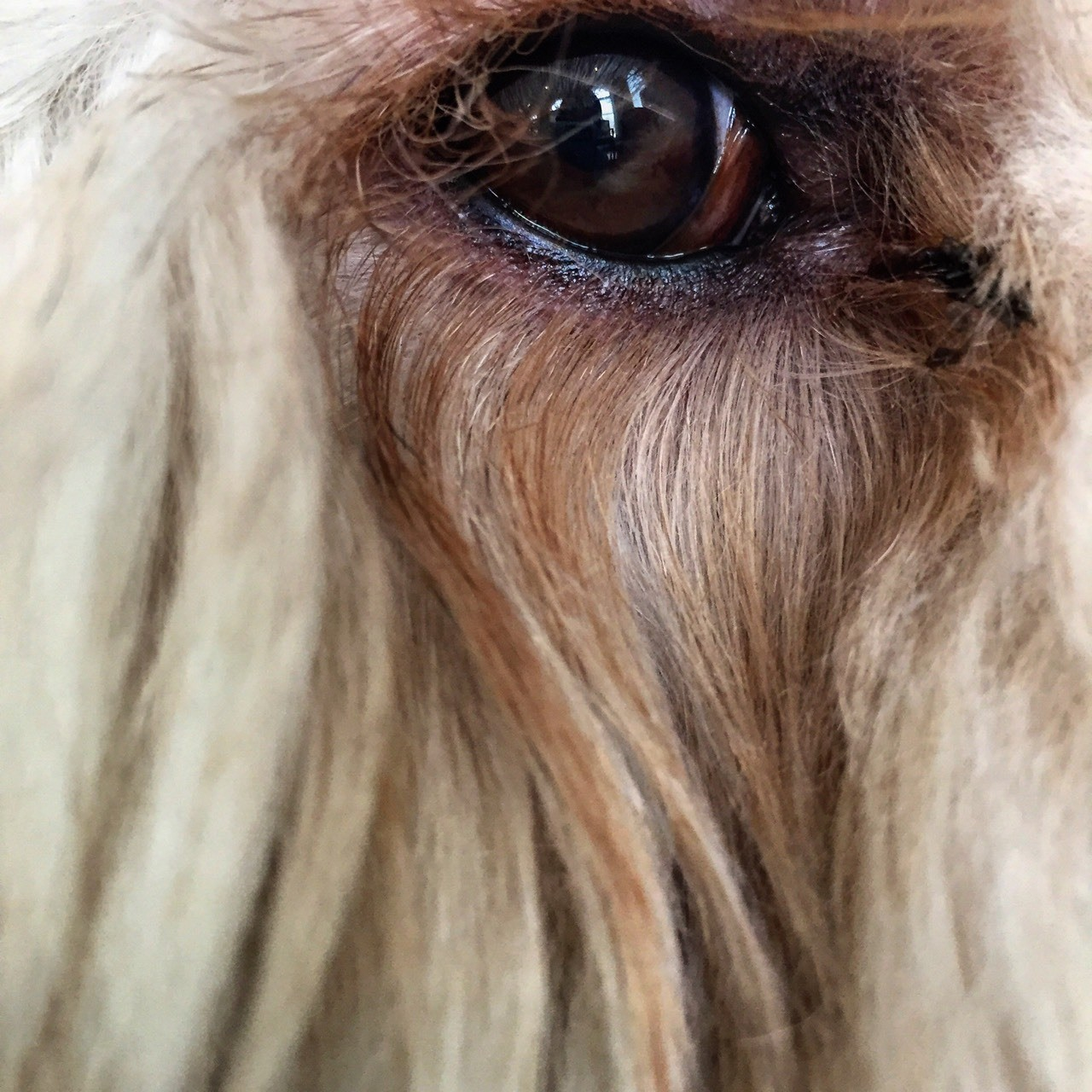 This photo focused on the eye of a dog. Notice how the eye is t in the center, it adds depth to the photo which also adds a sense of mystery.