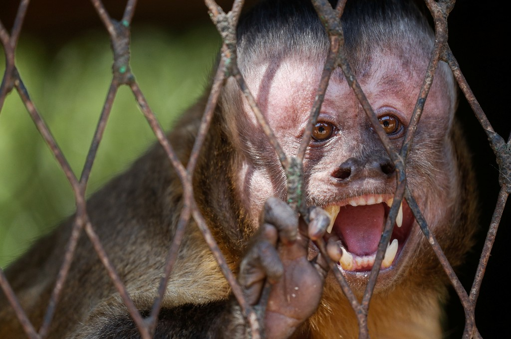 Keepers, animals keep each other company at Cairo's shuttered zoo