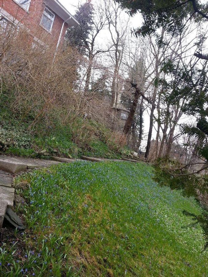 Rosedale spring