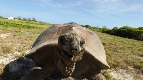 Never, Ever Interrupt Mating Giant Tortoises
