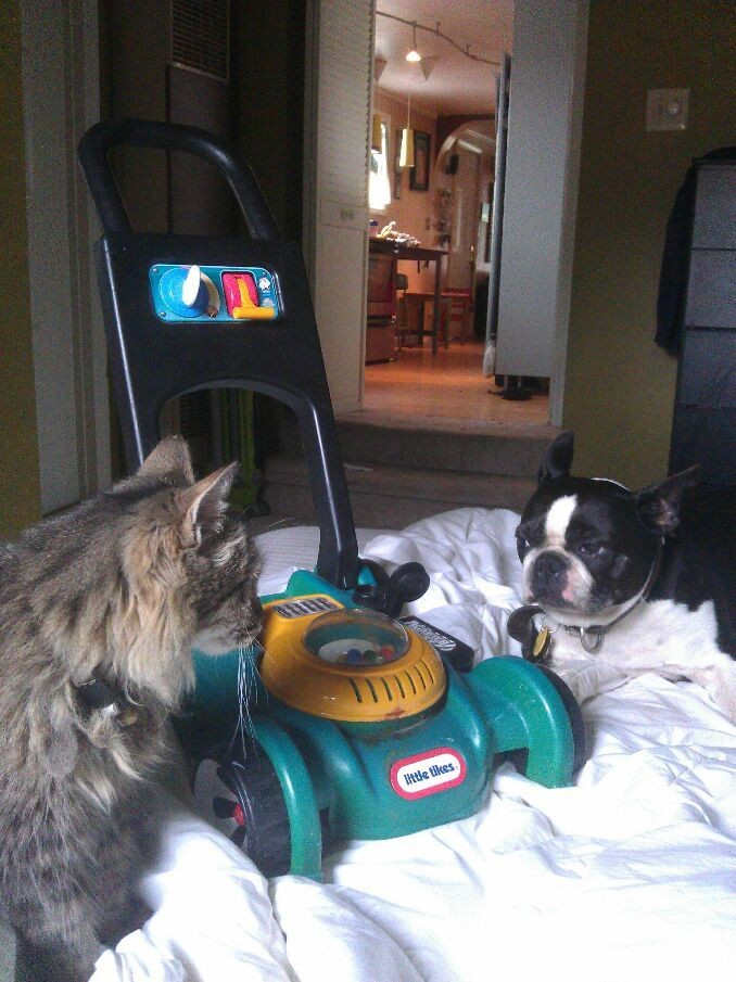 cat, dog and lawn mower on my bed