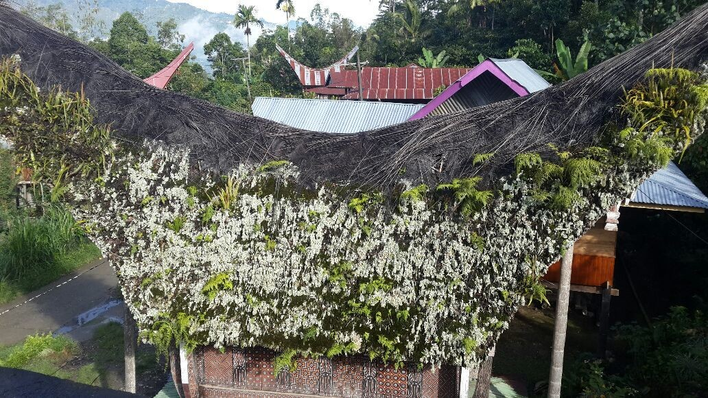 one of older traditional house of Toraja