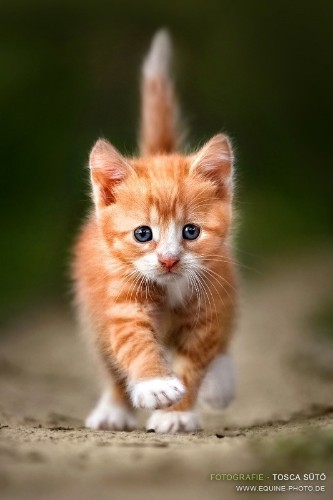 Walking Down The Street Like A Pro Kitten