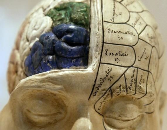 Humans Already Use Way, Way More Than 10% of Their Brains