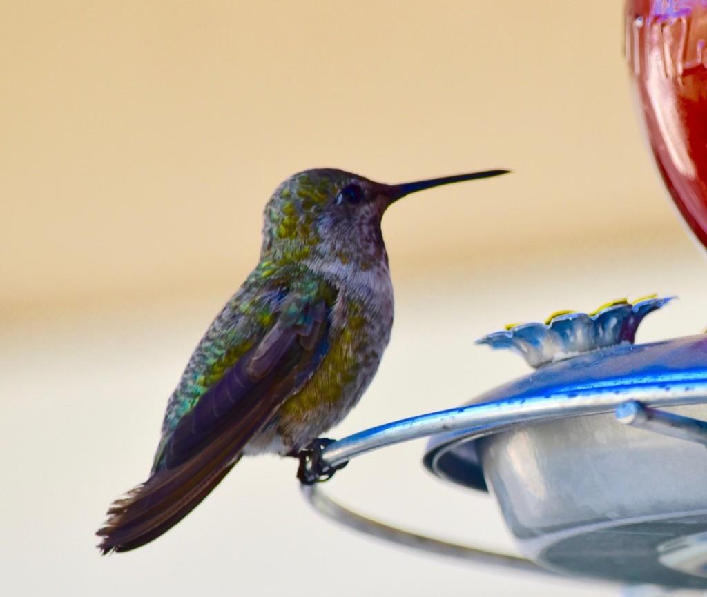 Everything Hummingbirds - Magazine cover