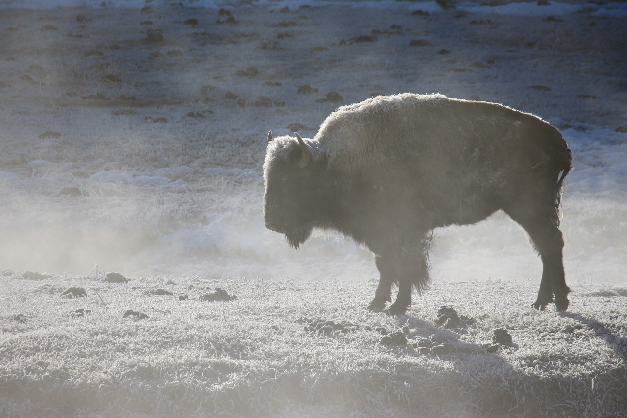 Photos taken in and around Yellowstone. By Carol S Bock