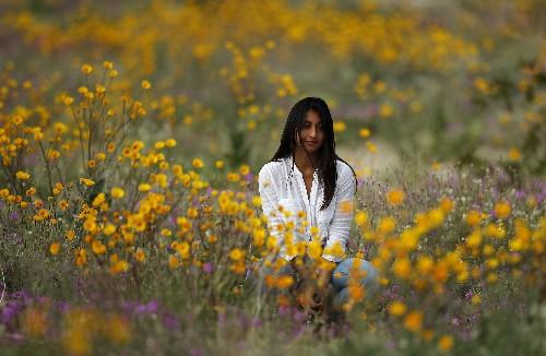 Rain brings 2nd California super bloom in 2 years