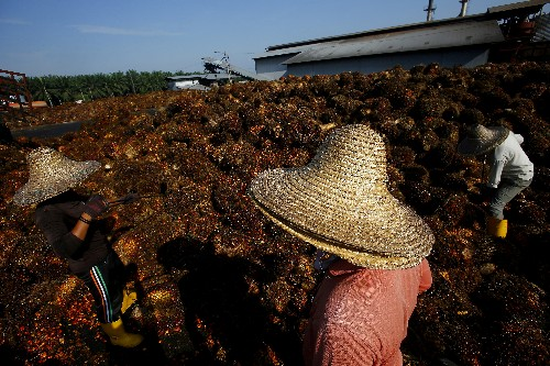 Malaysia says Norway move to ban palm-based biodiesel could hinder EFTA trade talks