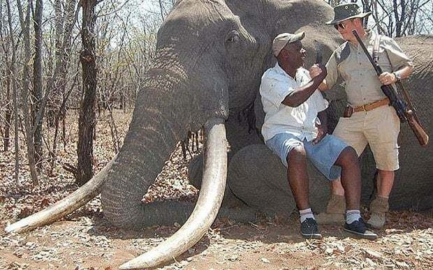 Biggest elephant killed in Africa for almost 30 years brings back memories of Cecil the lion