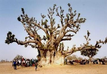Bauabschnitt Baum Africa