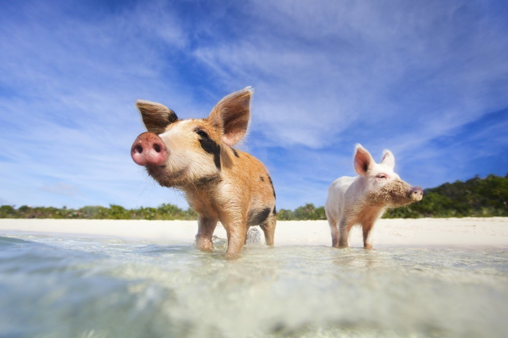 Animal islands: seven places where creatures rule