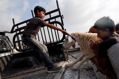 Gazans too poor to afford sheep for Eid sacrifice under blockade, Israel cash row