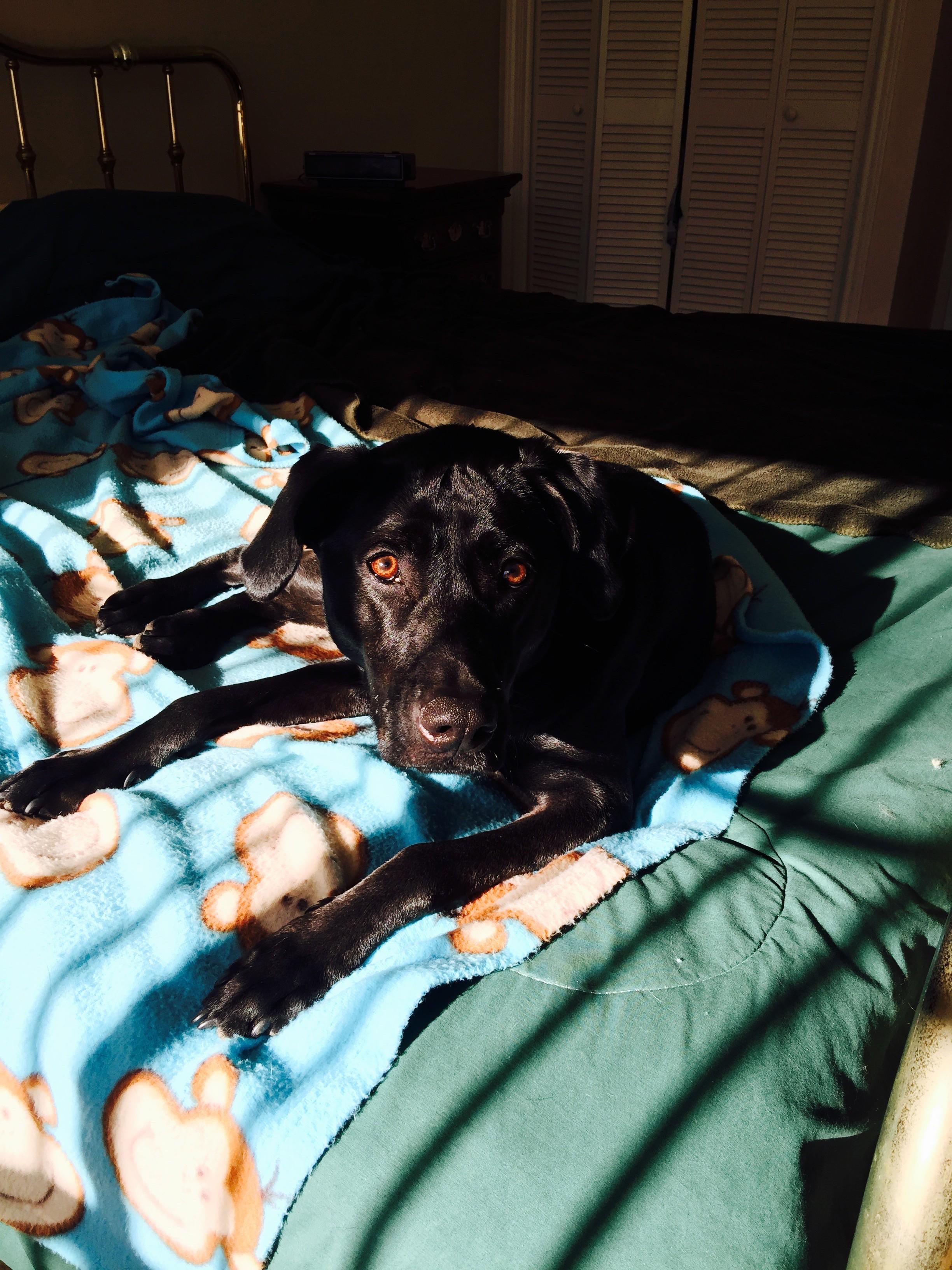 Stella soaking sunshine.