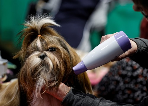 Crufts Dog Show in Pictures