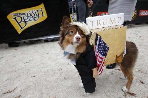 Crazy, Inspired Halloween Costumes for Dogs: Pictures