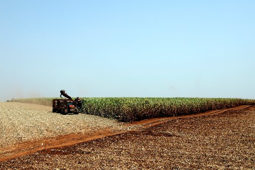 Dryness cuts crop for world's largest sugarcane plant in Brazil