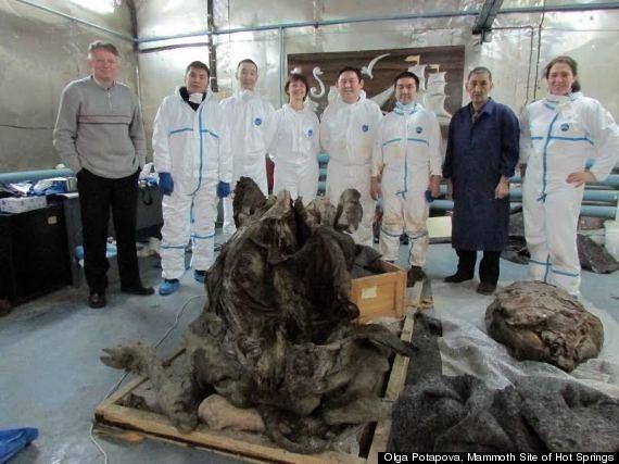 Bison Mummy Found Frozen In Siberia Dates Back 9,000 Years