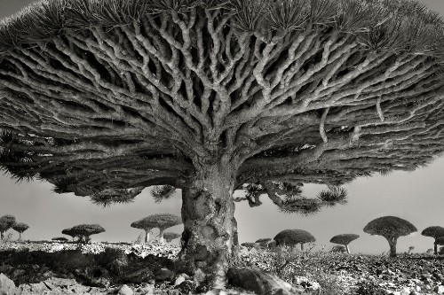 These Ancient Trees Have Stories to Tell