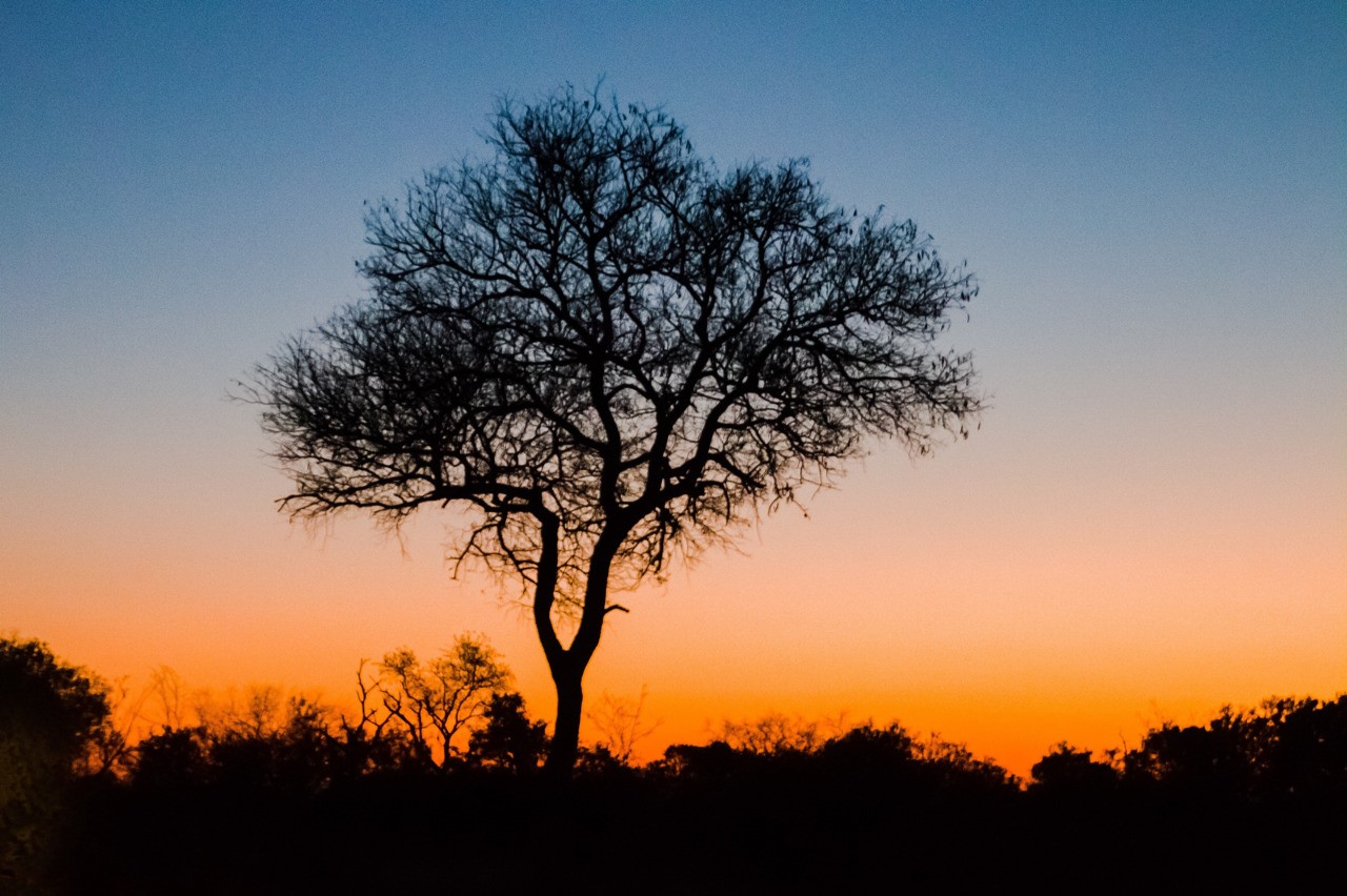 Sunset on one of the evening game drives with Elephant Plains Game Reserve South Africa.