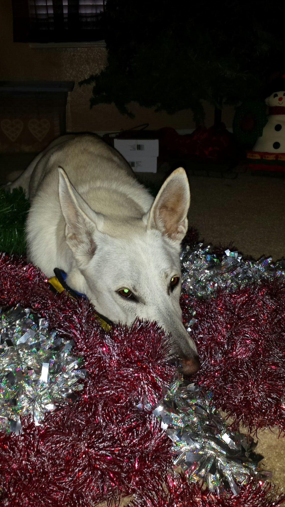 Naga helping decorate