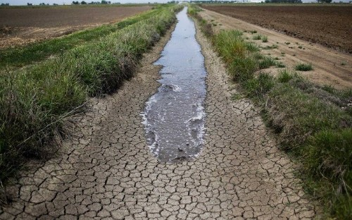 How Growers Gamed California's Drought