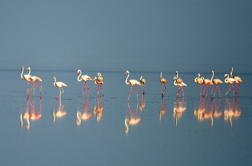 Flamingo Chicks Emerge From Nests in Turkey: Pictures