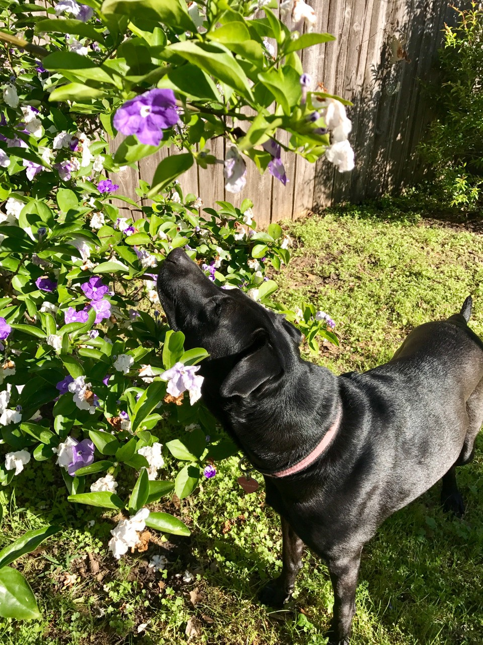 Stella smelling the flowers.