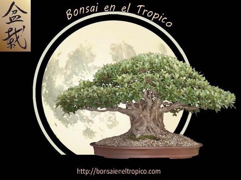 Bonsai en el Tropico - Magazine cover