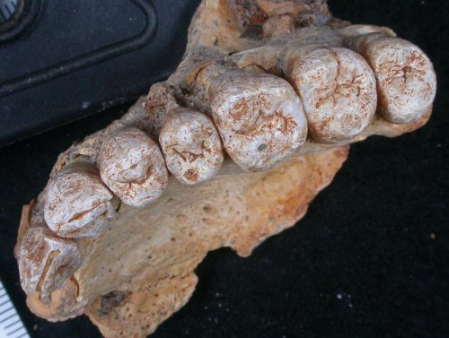 Oldest human remains outside Africa found in Israeli cave