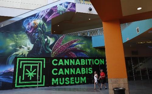 Latest Vegas Attraction, a Marijuana Museum: Pictures