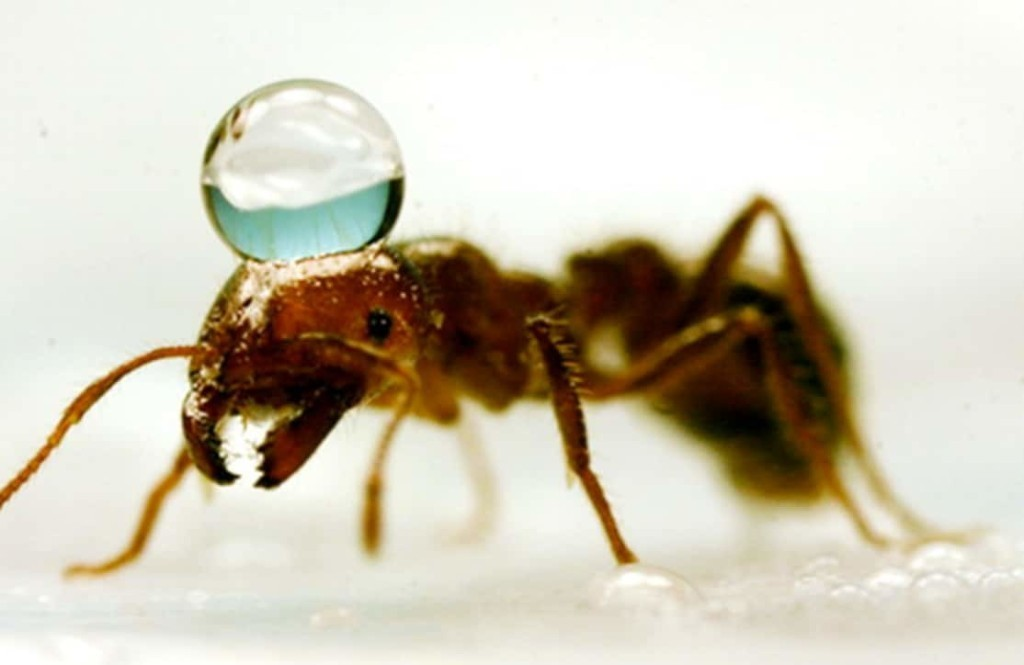 The terrifying science behind floating fire ant colonies — and how to destroy them