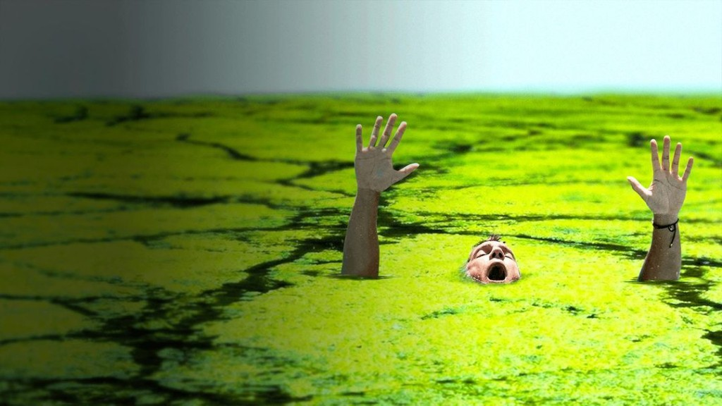 What If Algae Took Over the Oceans?