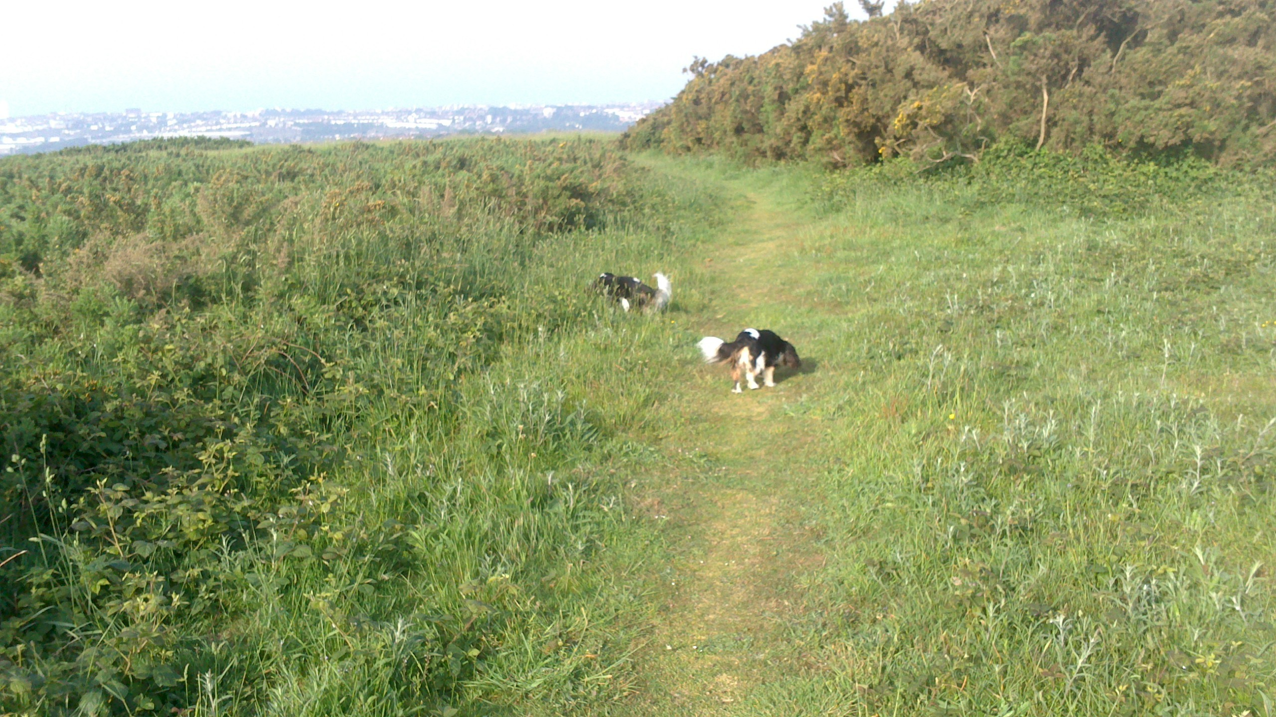 Spirit and Amber conduct an archaeological dig at Hollingbury,a Neolithic hill fort.