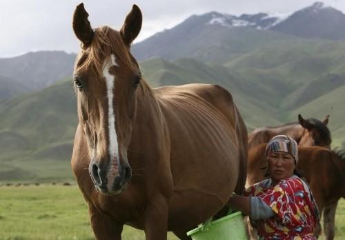 Киргизия депортировала британца после неудачной шутки про еду