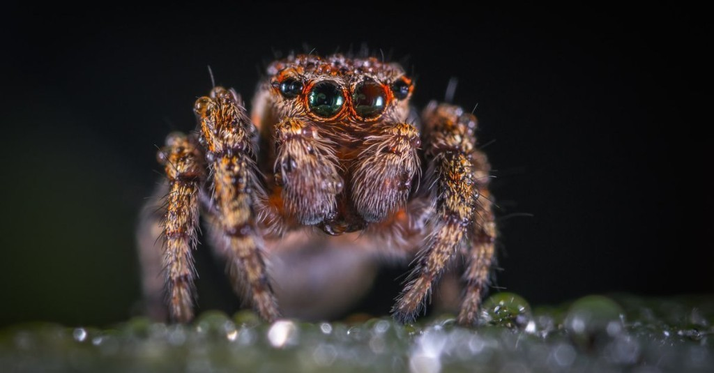 Your car is probably full of spiders