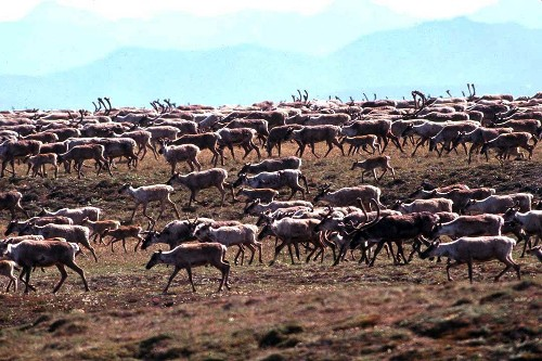 Groups sue for information on Arctic refuge lease sale
