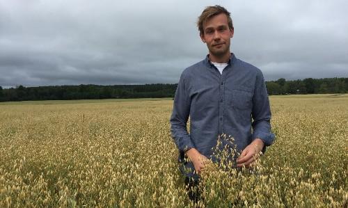 'Wow, no cow': the Swedish farmer using oats to make milk