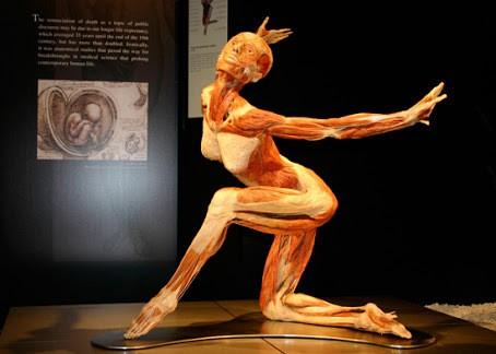 """llega a DURANGO """"OUR BODY, EL UNIVERSO DENTRO"""" Museo Francisco Villa, 13 de febrero al 22 de Marzo"""