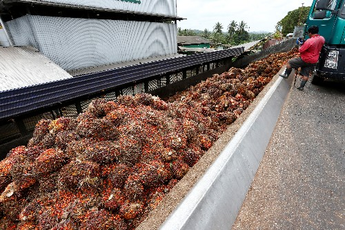 Palm eases on bearish price, output outlook