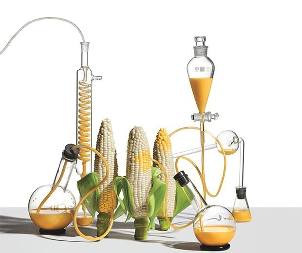 The Great GMO-Food Debate: Diet