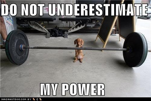 Puppy's are so strong