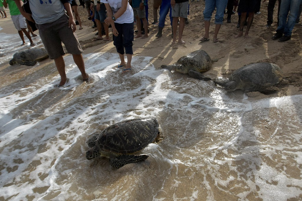 Indonesia releases 25 sea turtles rescued in raid on poachers