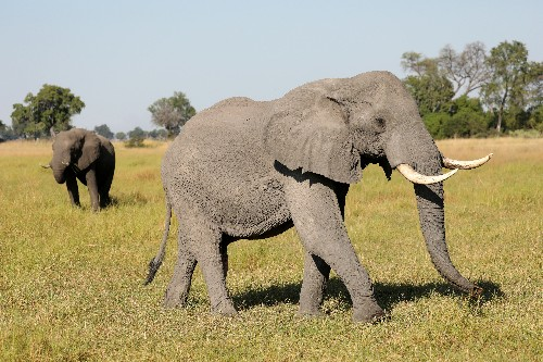 Botswana bans hunters after killing of research elephant