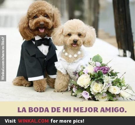Los invito a la boda de mi mejor amigo.