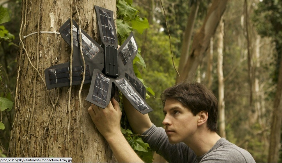 Tune in to see how one social entrepreneur is transforming discarded cell phones into devices to stop illegal logging