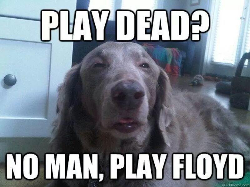 Pink Floyd vs Grateful Dead