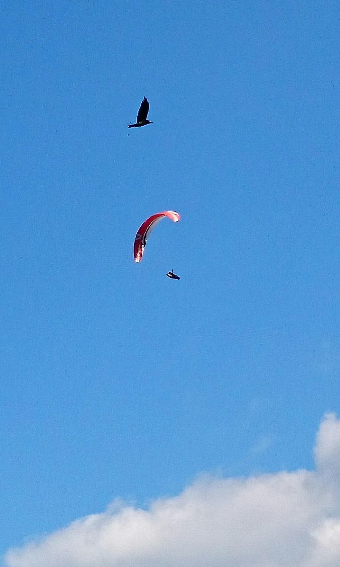 Lucky shot! #paragliding
