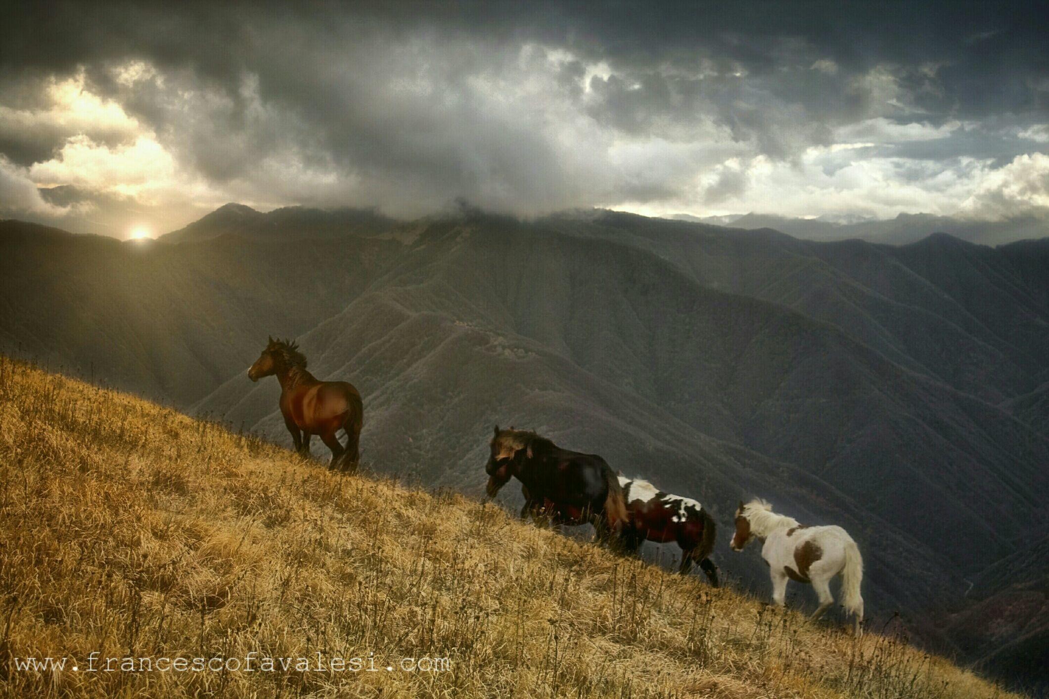 Val Boreca - come cavalli che riprendono a correre